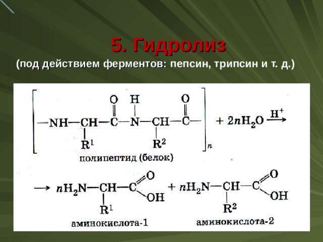 5. Гидролиз ( под действием ферментов: пепсин, трипсин и т. д.)