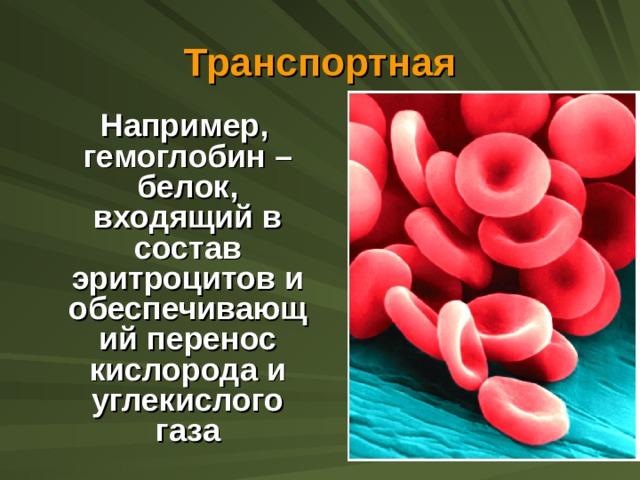 Транспортная  Например, гемоглобин – белок, входящий в состав эритроцитов и обеспечивающий перенос кислорода и углекислого газа