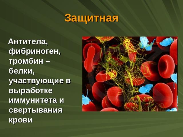 Защитная  Антитела, фибриноген, тромбин – белки, участвующие в выработке иммунитета и свертывания крови