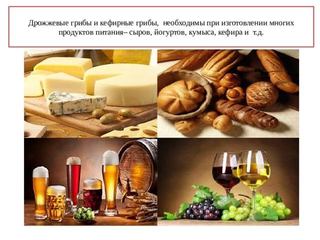 Дрожжевые грибы и кефирные грибы, необходимы при изготовлении многих продуктов питания– сыров, йогуртов, кумыса, кефира и т.д.