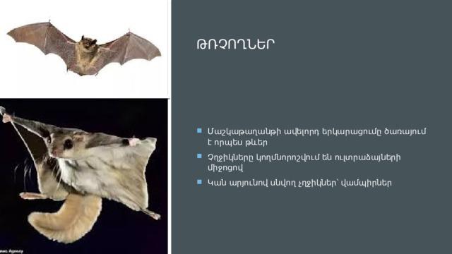 Թռչողներ Մաշկաթաղանթի ավելորդ երկարացումը ծառայում է որպես թևեր Չղջիկները կողմնորոշվում են ուլտրաձայների միջոցով Կան արյունով սնվող չղջիկներ՝ վամպիրներ
