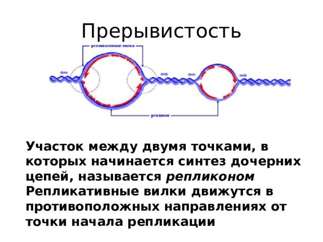 Прерывистость Участок между двумя точками, в которых начинается синтез дочерних цепей, называется репликоном Репликативные вилки движутся в противоположных направлениях от точки начала репликации