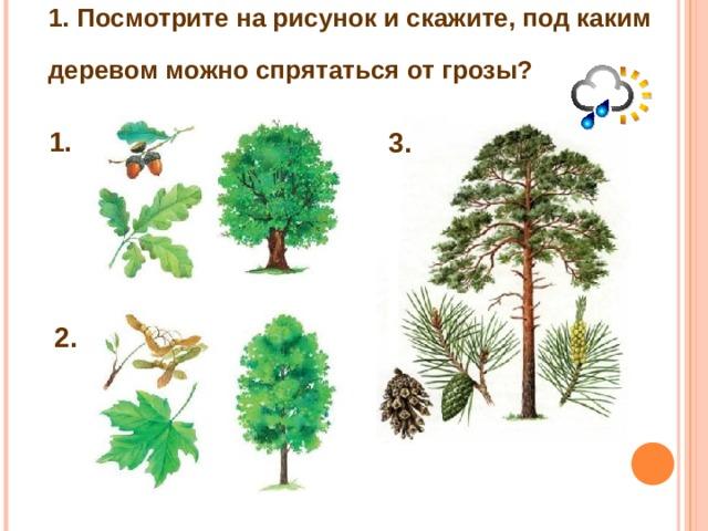 1. Посмотрите на рисунок и скажите, под каким  деревом можно спрятаться от грозы?  1. 3. 2.