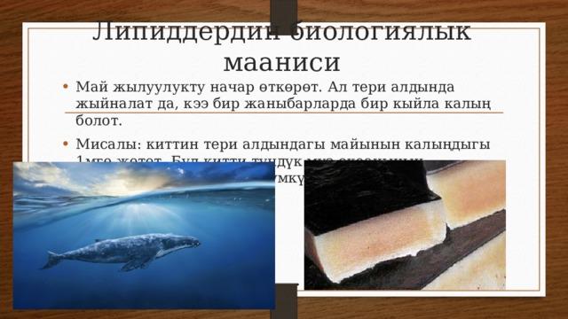 Липиддердин биологиялык мааниси Май жылуулукту начар өткөрөт. Ал тери алдында жыйналат да, кээ бир жаныбарларда бир кыйла калың болот. Мисалы: киттин тери алдындагы майынын калыңдыгы 1мге жетет. Бул китти түндүк муз океанынын деңиздеринде жашоого мүмкүндүк берет.