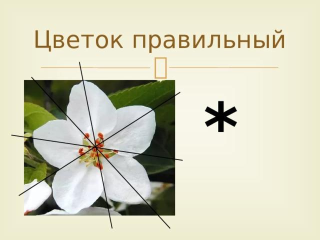 Цветок правильный *