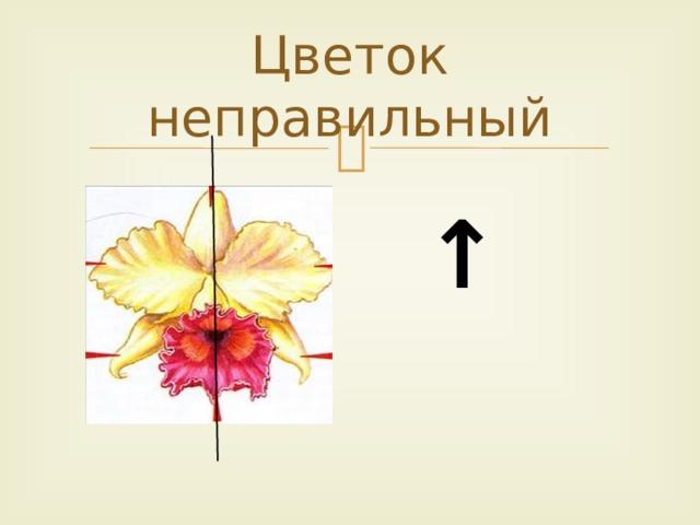 Цветок неправильный ↑