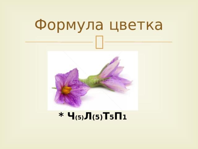 Формула цветка * Ч (5) Л (5) Т 5 П 1
