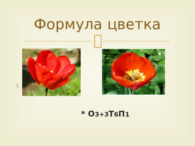 Формула цветка                * О 3+3 Т 6 П 1