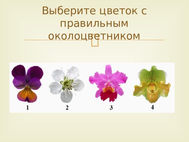 Выберите цветок с правильным околоцветником