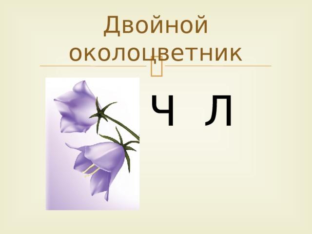 Двойной околоцветник Ч Л