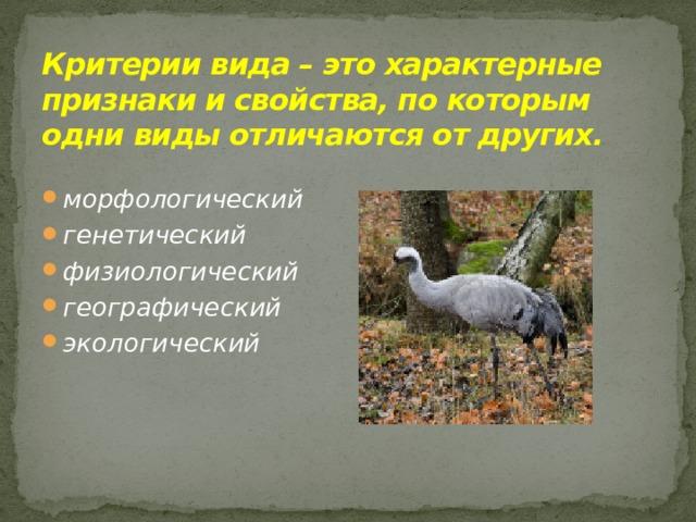 Критерии вида – это характерные признаки и свойства, по которым одни виды отличаются от других.