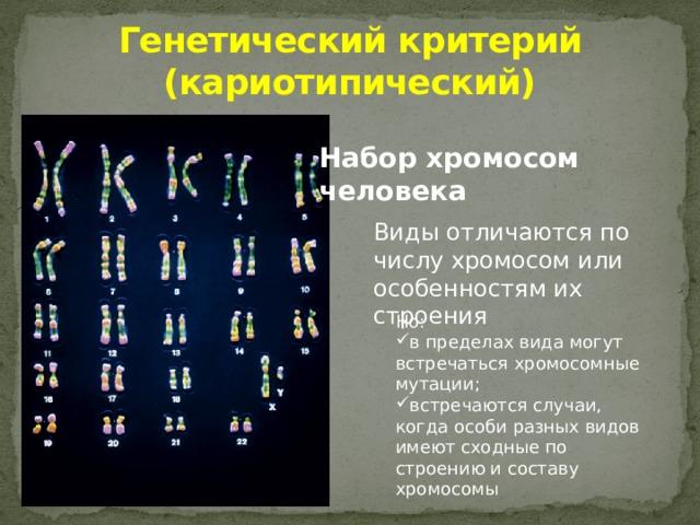 Генетический критерий (кариотипический) Набор хромосом человека Виды отличаются по числу хромосом или особенностям их строения Но:
