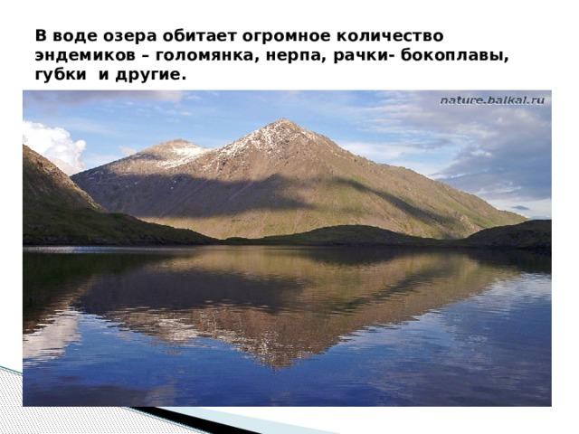 В воде озера обитает огромное количество эндемиков – голомянка, нерпа, рачки- бокоплавы, губки и другие.