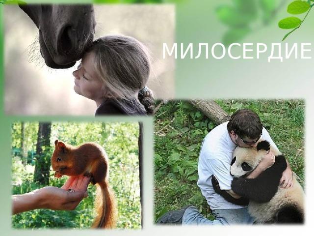 МИЛОСЕРДИЕ Белка - http://nature.baikal.ru/phs/norm/43/43428.jpg Панда - http://antipolis.fiftiz.fr/files/130470474930.jpeg Конь - http://cs10518.vkontakte.ru/u4454409/-14/x_7611e0fe.jpg