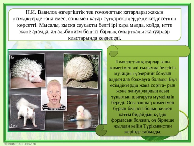 Н.И. Вавилов өзгергіштік тек гомологтық қатарлары жакын өсімдіктерде ғана емес, сонымен катар сүтқоректілерде де кездесетінін көрсетті. Мысалы, қысқа саусақты белгі ірі қара малда, койда, итте және адамда, ал альбинизм белгісі барлық омыртқалы жануарлар кластарында кездеседі. Гомологтық қатарлар заңы көмегімен әлі ғылымда белгісіз мутация түрлерінін болуын алдын ала болжауға болады. Бұл өсімдіктердід жаңа сортта- рын және жануарлардың асыл тұқымын шығаруға мүмкіндік береді. Осы заңньщ көмегімен бүрын белгісіз болып келген катты бидайдың күздік формасын болжап, ол бірнеше жылдан кейін Түрікменстан жерінде табылды.