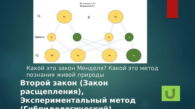 Какой это закон Менделя? Какой это метод познания живой природы Второй закон (Закон расщепления), Экспериментальный метод (Гибридологический)