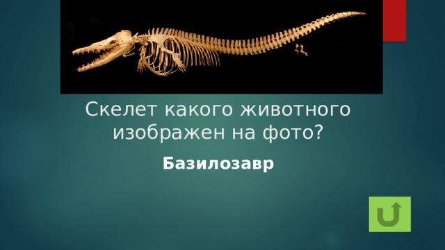 Скелет какого животного изображен на фото? Базилозавр