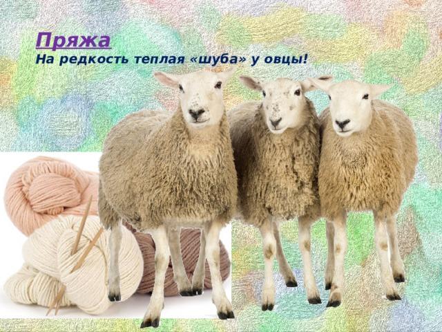 Пряжа  На редкость теплая «шуба» у овцы!