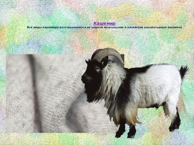 Кашемир  Все виды кашемира изготавливаются из шерсти монгольских и китайских высокогорных козликов