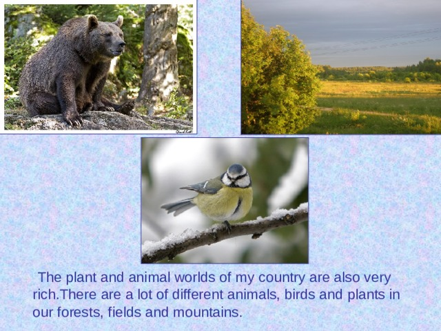 The plant and animal worlds of my country are also very rich.There are a lot of different animals, birds and plants in our forests, fields and mountains.