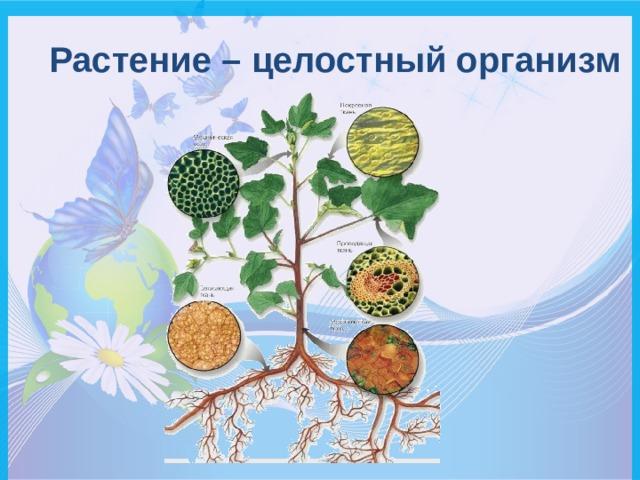 Растение – целостный организм