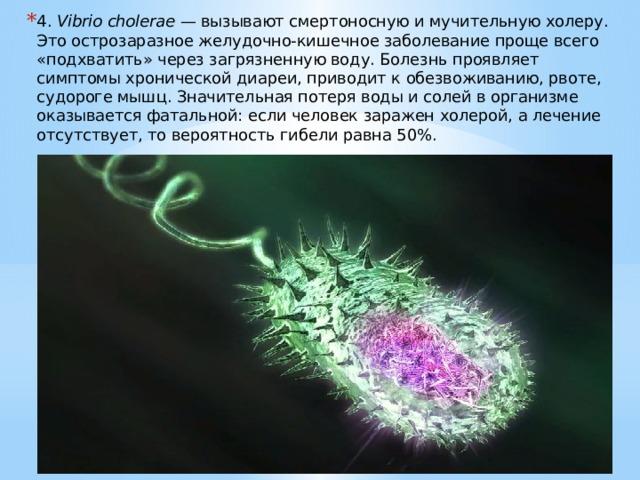 4. Vibrio cholerae — вызывают смертоносную и мучительную холеру. Это острозаразное желудочно-кишечное заболевание проще всего «подхватить» через загрязненную воду. Болезнь проявляет симптомы хронической диареи, приводит к обезвоживанию, рвоте, судороге мышц. Значительная потеря воды и солей в организме оказывается фатальной: если человек заражен холерой, а лечение отсутствует, то вероятность гибели равна 50%.