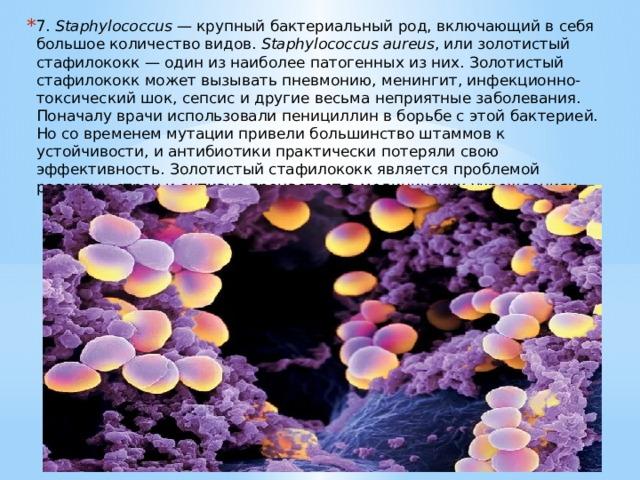 7. Staphylococcus — крупный бактериальный род, включающий в себя большое количество видов. Staphylococcus aureus , или золотистый стафилококк — один из наиболее патогенных из них. Золотистый стафилококк может вызывать пневмонию, менингит, инфекционно-токсический шок, сепсис и другие весьма неприятные заболевания. Поначалу врачи использовали пенициллин в борьбе с этой бактерией. Но со временем мутации привели большинство штаммов к устойчивости, и антибиотики практически потеряли свою эффективность. Золотистый стафилококк является проблемой развитых стран и активно процветает в медицинских учреждениях.