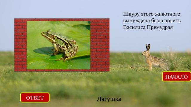 Шкуру этого животного вынуждена была носить Василиса Премудрая НАЧАЛО ОТВЕТ Лягушка