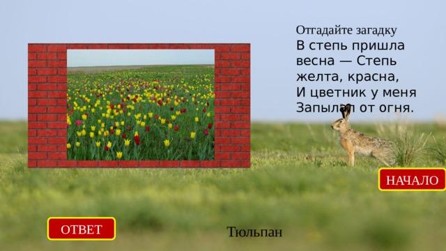 Отгадайте загадку В степь пришла весна — Степь желта, красна, И цветник у меня Запылал от огня.   НАЧАЛО ОТВЕТ Тюльпан