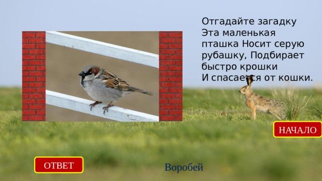 Отгадайте загадку Эта маленькая пташка Носит серую рубашку, Подбирает быстро крошки И спасается от кошки. НАЧАЛО ОТВЕТ Воробей