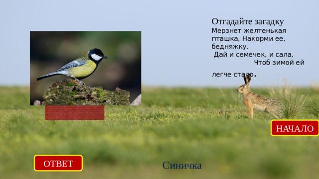 Отгадайте загадку Мерзнет желтенькая пташка, Накорми ее, бедняжку.  Дай и семечек, и сала, Чтоб зимой ей легче стало .   НАЧАЛО ОТВЕТ Синичка