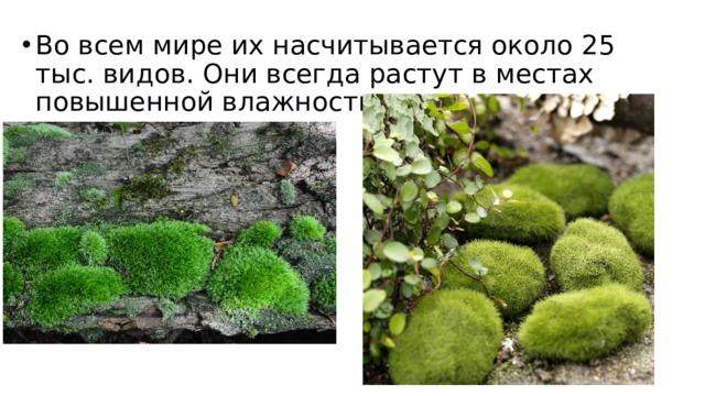 Во всем мире их насчитывается около 25 тыс. видов. Они всегда растут в местах повышенной влажности.