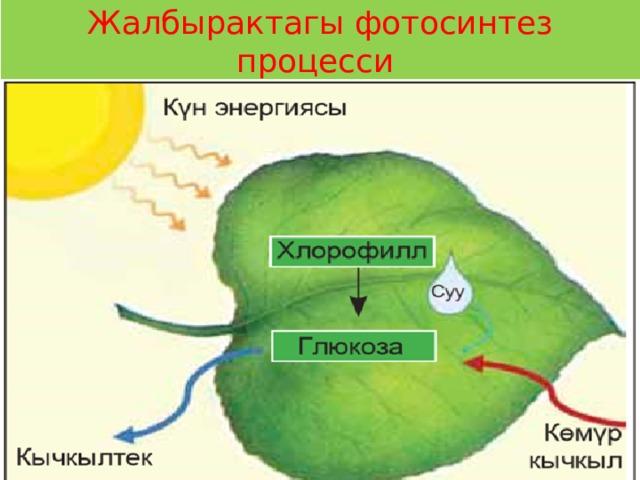 Жалбырактагы фотосинтез процесси