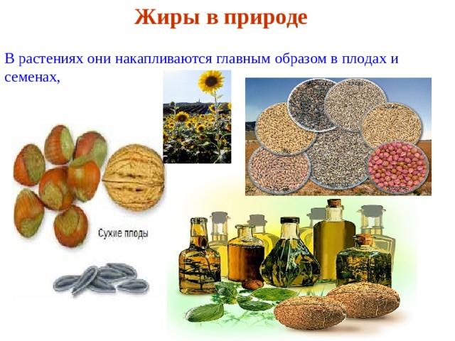 Жиры в природе   В растениях они накапливаются главным образом в плодах и семенах,