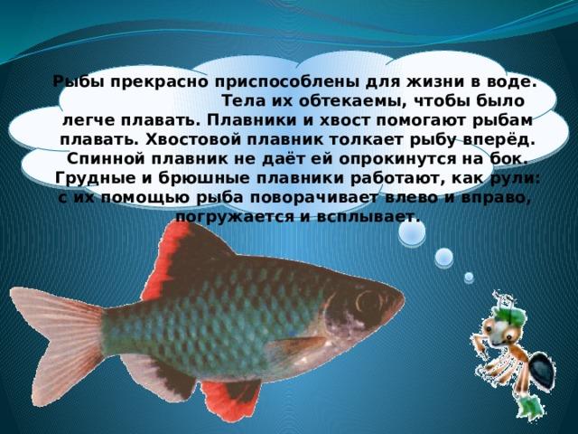 Рыбы прекрасно приспособлены для жизни в воде. Тела их обтекаемы, чтобы было легче плавать. Плавники и хвост помогают рыбам плавать. Хвостовой плавник толкает рыбу вперёд. Спинной плавник не даёт ей опрокинутся на бок. Грудные и брюшные плавники работают, как рули: с их помощью рыба поворачивает влево и вправо, погружается и всплывает.