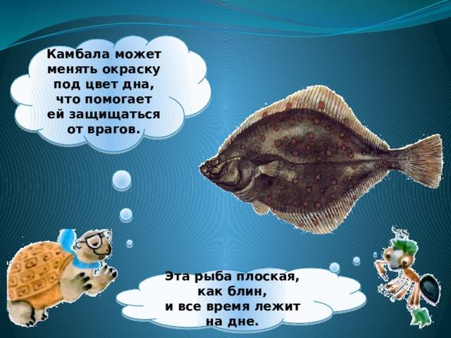 Камбала может менять окраску под цвет дна, что помогает ейзащищаться от врагов.  Эта рыба плоская, как блин,  ивсе время лежит надне.
