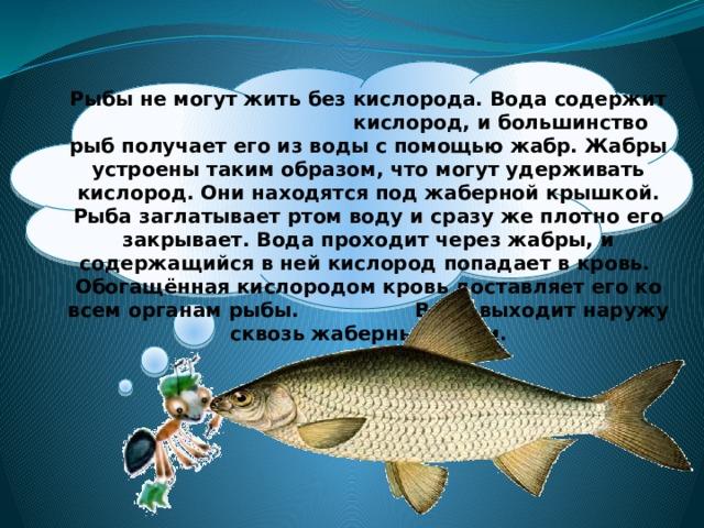 Рыбы не могут жить без кислорода. Вода содержит кислород, и большинство рыб получает его из воды с помощью жабр. Жабры устроены таким образом, что могут удерживать кислород. Они находятся под жаберной крышкой. Рыба заглатывает ртом воду и сразу же плотно его закрывает. Вода проходит через жабры, и содержащийся в ней кислород попадает в кровь. Обогащённая кислородом кровь доставляет его ко всем органам рыбы. Вода выходит наружу сквозь жаберные щели.