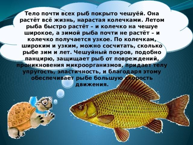 Тело почти всех рыб покрыто чешуёй. Она растёт всё жизнь, нарастая колечками. Летом рыба быстро растёт – и колечко на чешуе широкое, а зимой рыба почти не растёт – и колечко получается узкое. По колечкам, широким и узким, можно сосчитать, сколько рыбе зим и лет. Чешуйный покров, подобно панцирю, защищает рыб от повреждений, проникновения микроорганизмов, придает телу упругость, эластичность, и благодаря этому обеспечивает рыбе большую скорость движения.