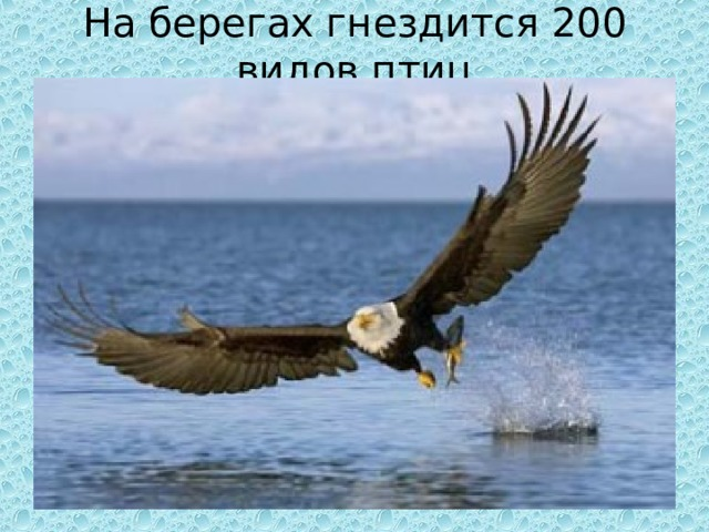 На берегах гнездится 200 видов птиц