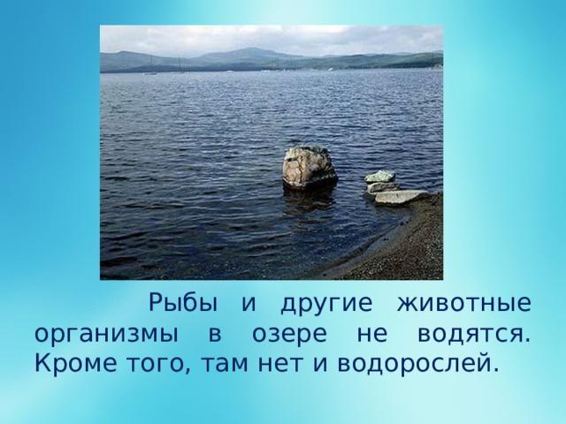 Рыбы и другие животные организмы в озере не водятся. Кроме того, там нет и водорослей.