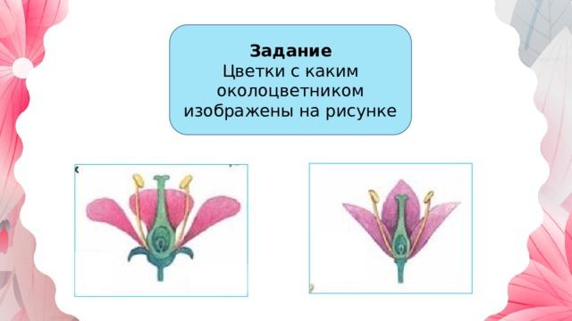 Задание Цветки с каким околоцветником изображены на рисунке