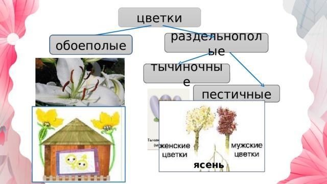 цветки раздельнополые обоеполые обоеполые тычиночные пестичные ясень