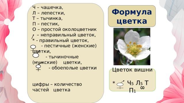 8 Ч – чашечка, Л – лепестки, Т – тычинка, П – пестик, О – простой околоцветник – неправильный цветок, * - правильный цветок,  - пестичные (женские) цветки,  - тычиночные (мужские) цветки,  - обоеполые цветки  цифры – количество частей цветка  Формула  цветка Цветок вишни * Ч 5 Л 5 Т П 1