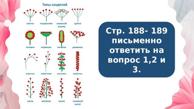 Стр. 188- 189 письменно ответить на вопрос 1,2 и 3.