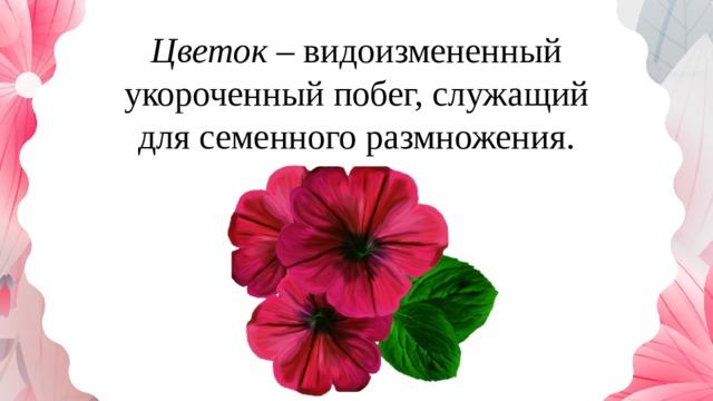 Цветок – видоизмененный укороченный побег, служащий для семенного размножения.