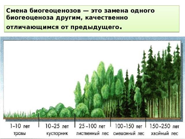Смена биогеоценозов — это замена одного биогеоценоза другим, качественно отличающимся от предыдущего .
