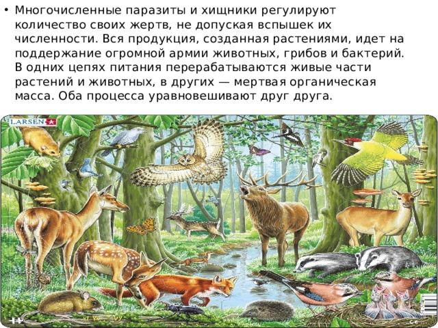 Многочисленные паразиты и хищники регулируют количество своих жертв, не допуская вспышек их численности. Вся продукция, созданная растениями, идет на поддержание огромной армии животных, грибов и бактерий. В одних цепях питания перерабатываются живые части растений и животных, в других — мертвая органическая масса. Оба процесса уравновешивают друг друга.