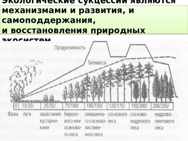 Экологические сукцессии являются механизмами и развития, и самоподдержания,  и восстановления природных экосистем.