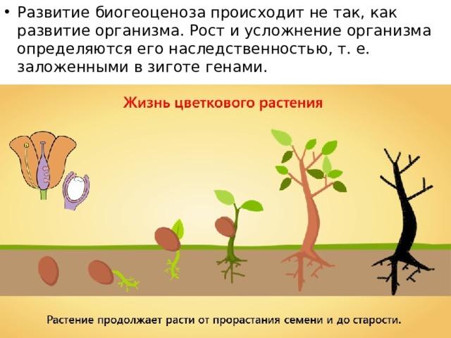 Развитие биогеоценоза происходит не так, как развитие организма. Рост и усложнение организма определяются его наследственностью, т. е. заложенными в зиготе генами.