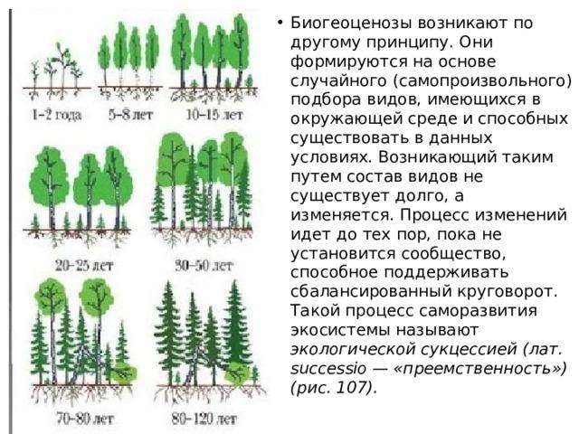Биогеоценозы возникают по другому принципу. Они формируются на основе случайного (самопроизвольного) подбора видов, имеющихся в окружающей среде и способных существовать в данных условиях. Возникающий таким путем состав видов не существует долго, а изменяется. Процесс изменений идет до тех пор, пока не установится сообщество, способное поддерживать сбалансированный круговорот. Такой процесс саморазвития экосистемы называют экологической сукцессией (лат. successio — «преемственность») (рис. 107).